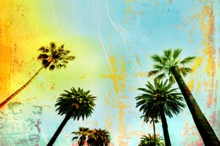 California beach art palm trees background